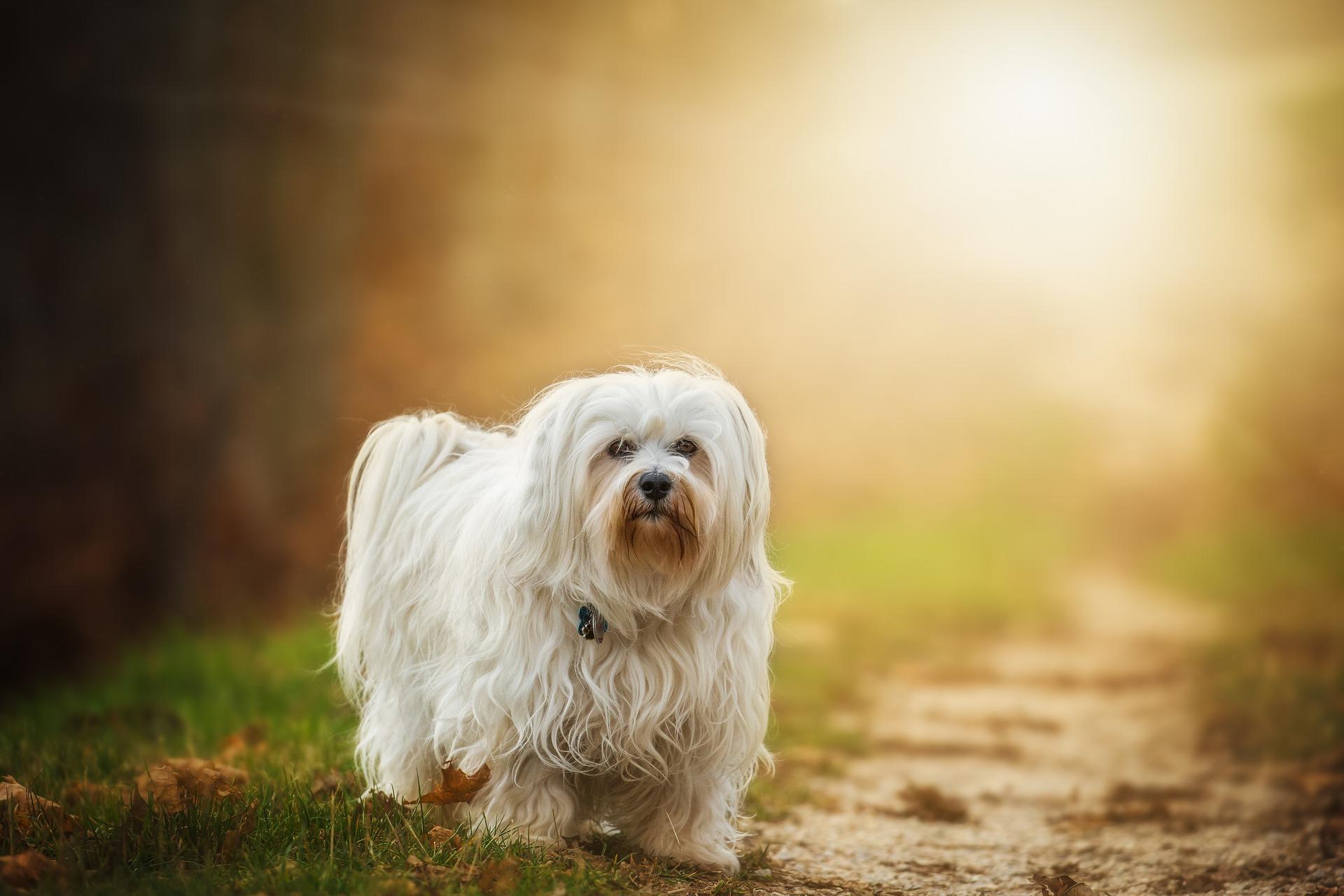 dog-1134492_1920